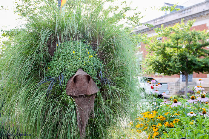 lion-topiary-south-carolina-festival-of-flowers