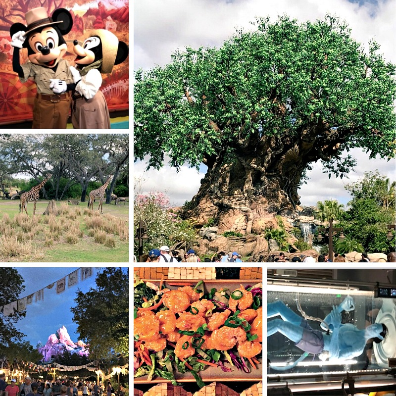 animal-kingdom-theme-park-Walt-Disney-World