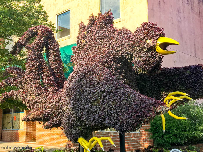 The South Carolina Festival of Flowers is made up of cool topiaries such as the Gamecock mascot.