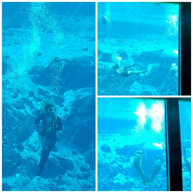 expert diver dancers at Weeki Wachee mermaid show