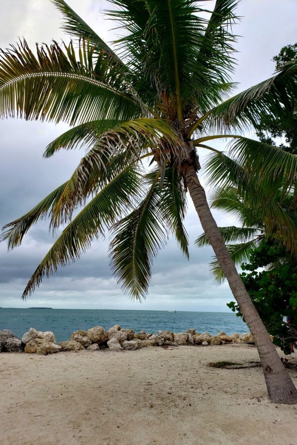 fort-zachary-taylor-beach-palm-trees